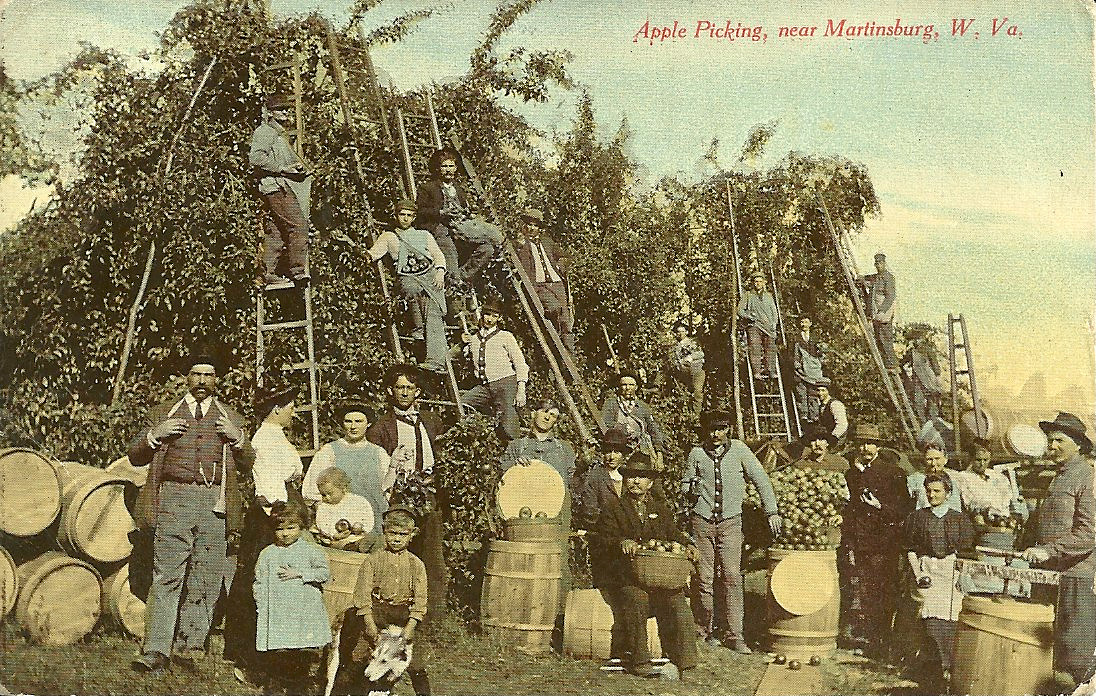 ApplePickers Truth According to Us Annie Barrows